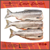 Frozen Chum Salmon From Russia