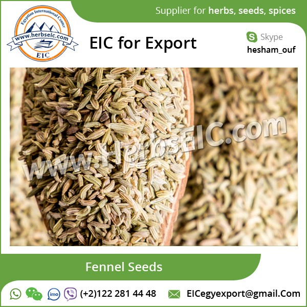 Bulk Supplier of Top Quality Fennel Seeds at Wholesale Price