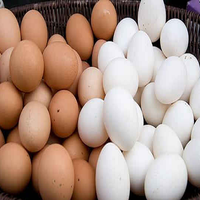 Chicken Table Eggs & Fertilized Hatching Eggs Cobb 500 and Ross 308 Chicken Hatching Eggs