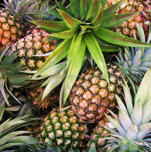 fresh pineapple for sale