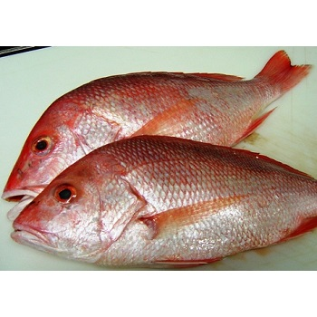 Fresh Sea Food- Red Snapper Fish
