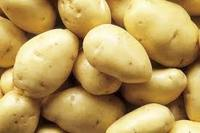 Fresh potato/Holland potato in bulk