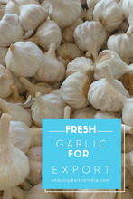 Fresh Quality White Garlic Exporters