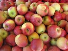 2017 new fresh fruits red Fuji apples available at good prices