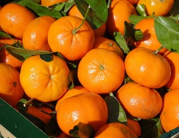 quality tangerine and other fruits