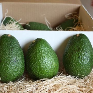 Fresh Avocado / Hass Avocado, Fuerte Avocado For Sale