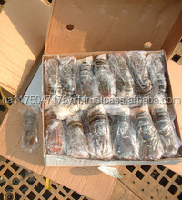 Whole Classic Frozen Slipper Lobster- best quality