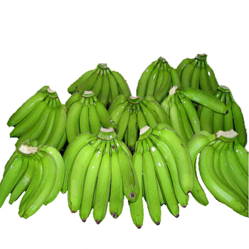 Supply Super Best Quality Banana From India