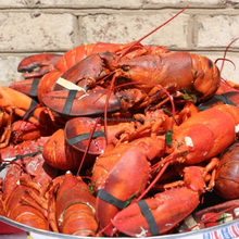 LIVE CRAYFISH - SPINY LOBSTER WHOLE ROUND GOOD PRICE