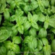 Basil Oil For Tea.
