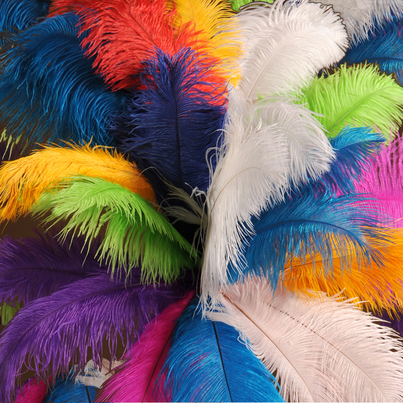 colorful decoration ostrich feather