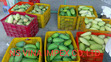 fresh fruit good quality from Vietnam 2017 fresh mango fruit