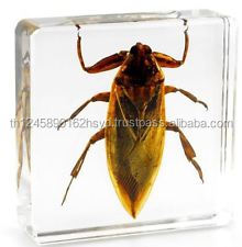 Real Insects Paperweight Rhinoceros Beetle Acrylic Resin Block