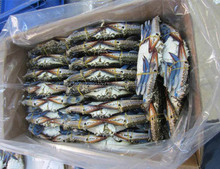 ROCK BOTTOM PRICE OFFER FROZEN BLUE SWIMMING CRAB W/R HONG KONG,SINGAPORE,MALAYSIA,INDONESIA,KOREA,TAIWAN,SOUTH KOREA,VIETNAM