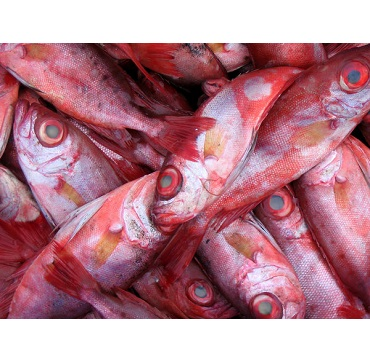Red Snapper Fish/Sea Food For Supply