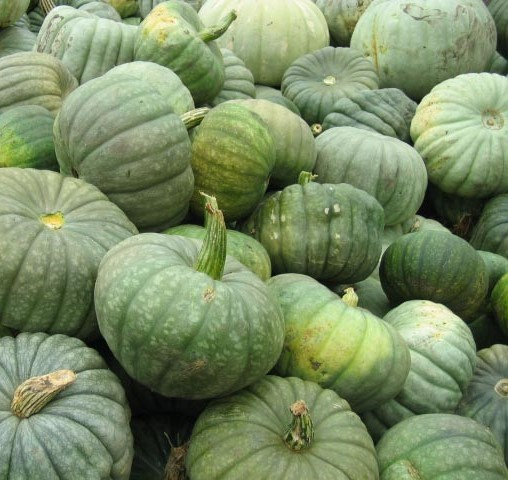 FRESH SWEET GREEN PUMPKINS
