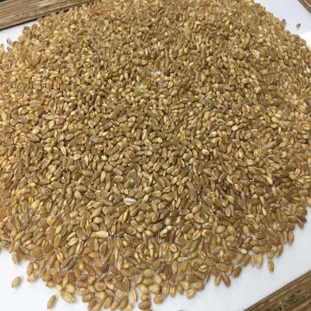 Hot Sale 4 grade wheat grain