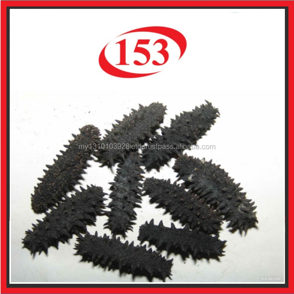 Premium Dried Spiky Sea Cucumber