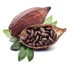 Best Cacao Beans +Dried Criollo Cocoa Beans +Dried Fermented Cacao +Dried Raw Cocoa Beans +Organicc