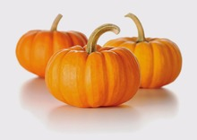 fresh pumpkin best quality from Vietnam 2017