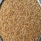 Red Sorghum Grain - Free Samples