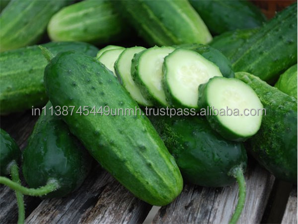 PURE CUCUMBER OIL FOR COSMETIC, SOAP, AROMATHERAPY AND SPA