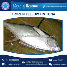 Best Selling Low Price Bulk Yellowfin Tuna