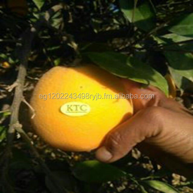 farm fresh orange from KTC company