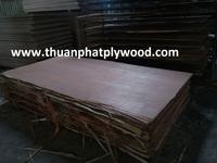 VIETNAM PACKING PLYWOOD FROM PLANTATION TIMBER