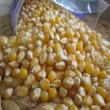Non-GMO Grade 2 Yellow Corn for Animal Feed.