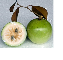 SGS Certified Delicious STAR APPLE Competitive Price