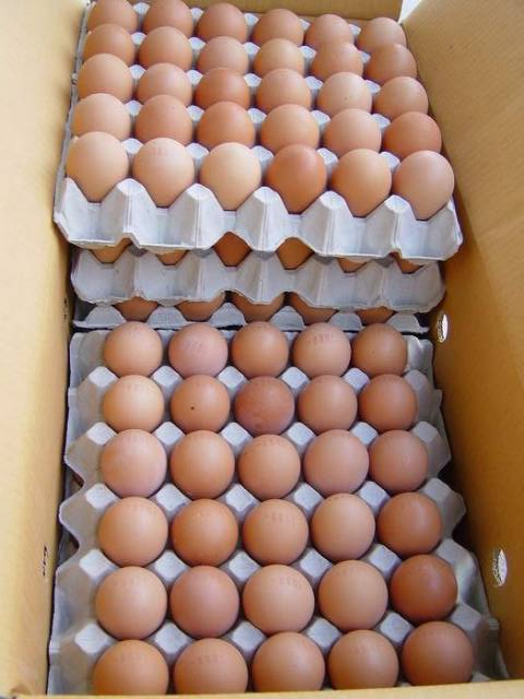 Farm Fresh Poultry Table Chicken Eggs Brown and White