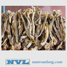 Supply Dried Bombay Duck fish with High Quality & The Best Price