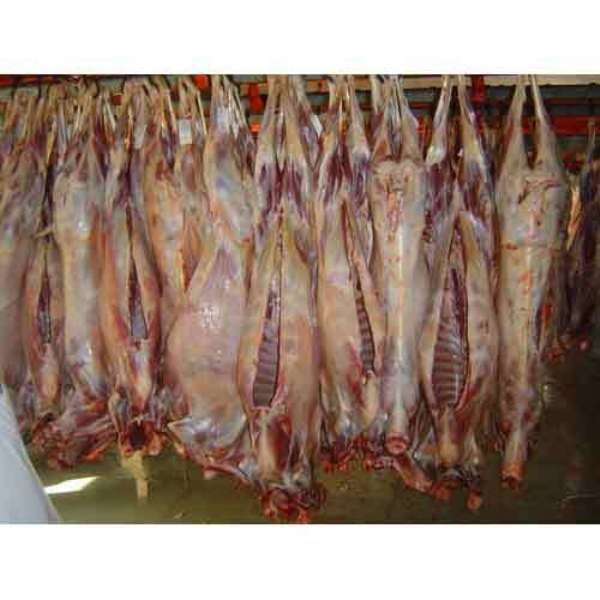 1st Grade AAA customer Choise HALAL FRESH / FROZEN GOAT / LAMB / SHEEP MEAT HOT SALE