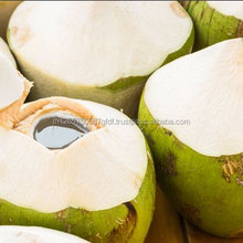 wholesale organic coconut water