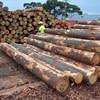 European poplar logs and lumber
