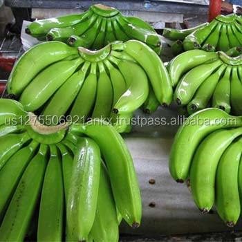 Fresh Cavenish Bananas