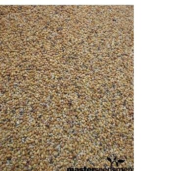 best quality forage seeds for sale at good prices