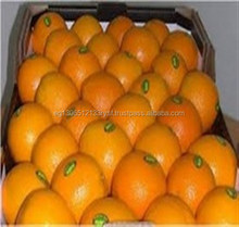 fresh navel orange from Egypt 2018