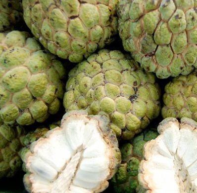 fresh sweet Custard Apple for sale at good price