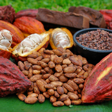 Well dried cocoa beans