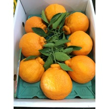 Best Sweet Natural Name All Fresh Citrus Fruits with Good Price