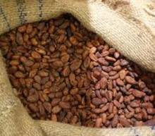High Grade Raw Dried fermented Cocoa Beans For Sale