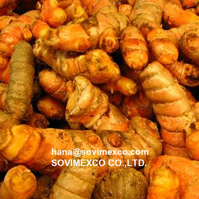 fresh turmeric in vietnam