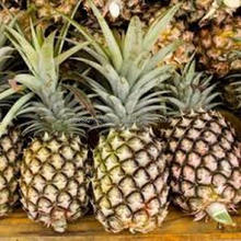 Premium Grade Fresh Pineapples