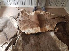 Salted and dry Donkey Hides, Skin, Leather