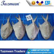 Best Quality golden pomfret/yellow pomfret fish silver/White/Black/Red Pomfret frozen fresh Fish