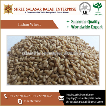 PURE QUALITY OF INDIAN WHEAT READY TO EXPORT AT A AFFORDABLE PRICE