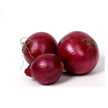 Best Quality Exporter Of India Onion