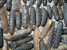 Frozen and Dried Sea Cucumber for sale